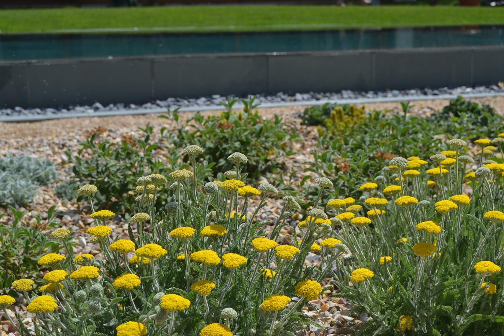 jardin_mediterraneo12