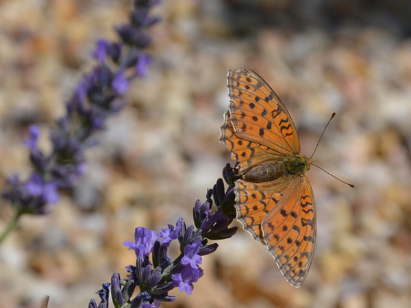 jardines de mariposas